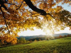 Autumn-Leaves-480x360